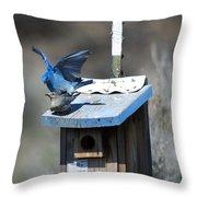 Mountain Bluebirds Mating Throw Pillow
