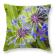 Mountain Bluet Flowers Throw Pillow