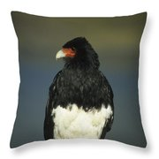 Mountain Caracara Throw Pillow