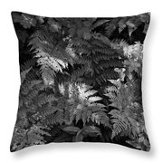 Mountain Ferns 1 Throw Pillow by Roger Snyder