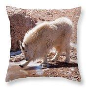 Mountain Goat Breaking Ice On Mount Evans Throw Pillow