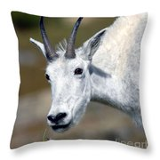 Mountain Goat Feeding Throw Pillow