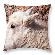 Mountain Goat Kid Portrait On Mount Evans Throw Pillow