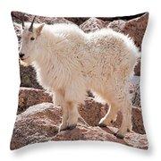 Mountain Goat On Mount Evans Throw Pillow