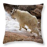 Mountain Goat On Snowfield On Mount Evans Throw Pillow