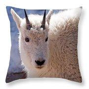 Mountain Goat Portrait On Mount Evans Throw Pillow
