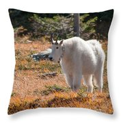 Mountain Goats Of Glacier Throw Pillow