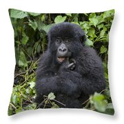 Mountain Gorilla Baby Chewing On Finger Throw Pillow