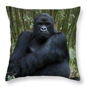 Mountain Gorilla Silverback Throw Pillow