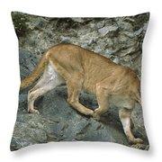 Mountain Lion Crossing Rocky Terrain Throw Pillow