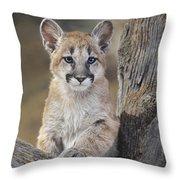Mountain Lion Cub Throw Pillow