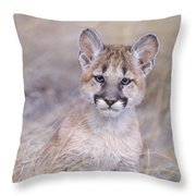 Mountain Lion Cub In Dry Grass Throw Pillow