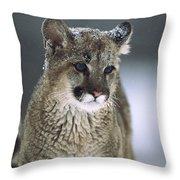 Mountain Lion Cub In Snow Montana Throw Pillow