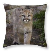 Mountain Lion Cub Walking Throw Pillow