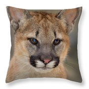 Mountain Lion Felis Concolor Captive Wildlife Rescue Throw Pillow
