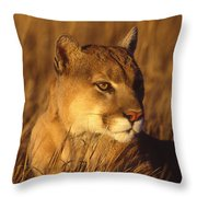 Mountain Lion Montana Throw Pillow