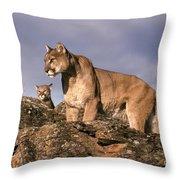 Mountain Lions Felis Concolor Throw Pillow