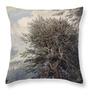 Mountainous Landscape With Beech Trees Throw Pillow