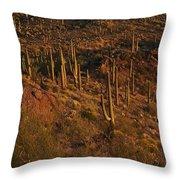 Mountainside Of Cacti Throw Pillow