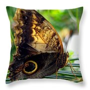 Mournful Owl Butterfly In Sunlight Throw Pillow