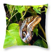 Mournful Owl Butterfly Wings Throw Pillow