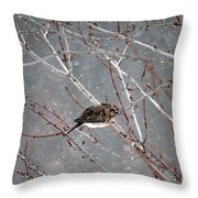 Mourning Dove Asleep In Snowfall Throw Pillow