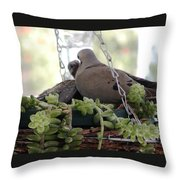 Mourning Dove Feeding Baby Dove Throw Pillow