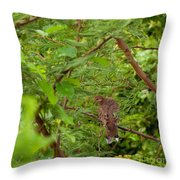 Mourning Dove Throw Pillow