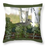 Mourning Dove Nesting Throw Pillow