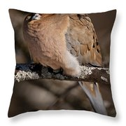 Mourning Dove Pictures 32 Throw Pillow