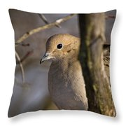 Mourning Dove Pictures 39 Throw Pillow