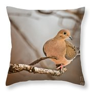 Mourning Dove Pictures 71 Throw Pillow
