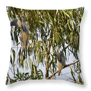 Mourning Doves Landing In Eucalyptus  Throw Pillow