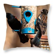 Mr. And Mrs. Red Winged Blackbird Throw Pillow