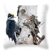 Mr. Black-bscked Woodpecker Throw Pillow