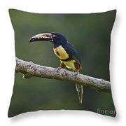 Mr. Colorful.. Throw Pillow