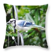 Mr Jay Throw Pillow
