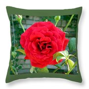 Mr Lincoln Rose Throw Pillow