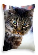 Mr. Lynx - Tabby - Cat Throw Pillow