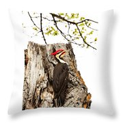 Mr.pileated Poses Throw Pillow