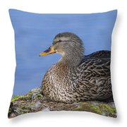 Mrs. Mallard Throw Pillow