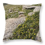Mt. Evans Wildflowers Throw Pillow