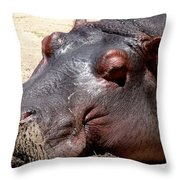 Muddy-faced Hippo Throw Pillow