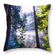 Muir Woods - Fog And Light Throw Pillow