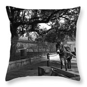Mule And Buggy Mono Throw Pillow