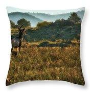 Mule Deer At De Weese Reservoir Throw Pillow