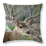 Mule Deer Buck In Velvet Throw Pillow
