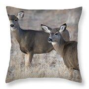 Mule Deer Does Throw Pillow