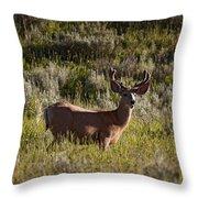 Mule Deer In Velvet   #2114 Throw Pillow