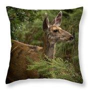 Mule Deer On Alert Throw Pillow